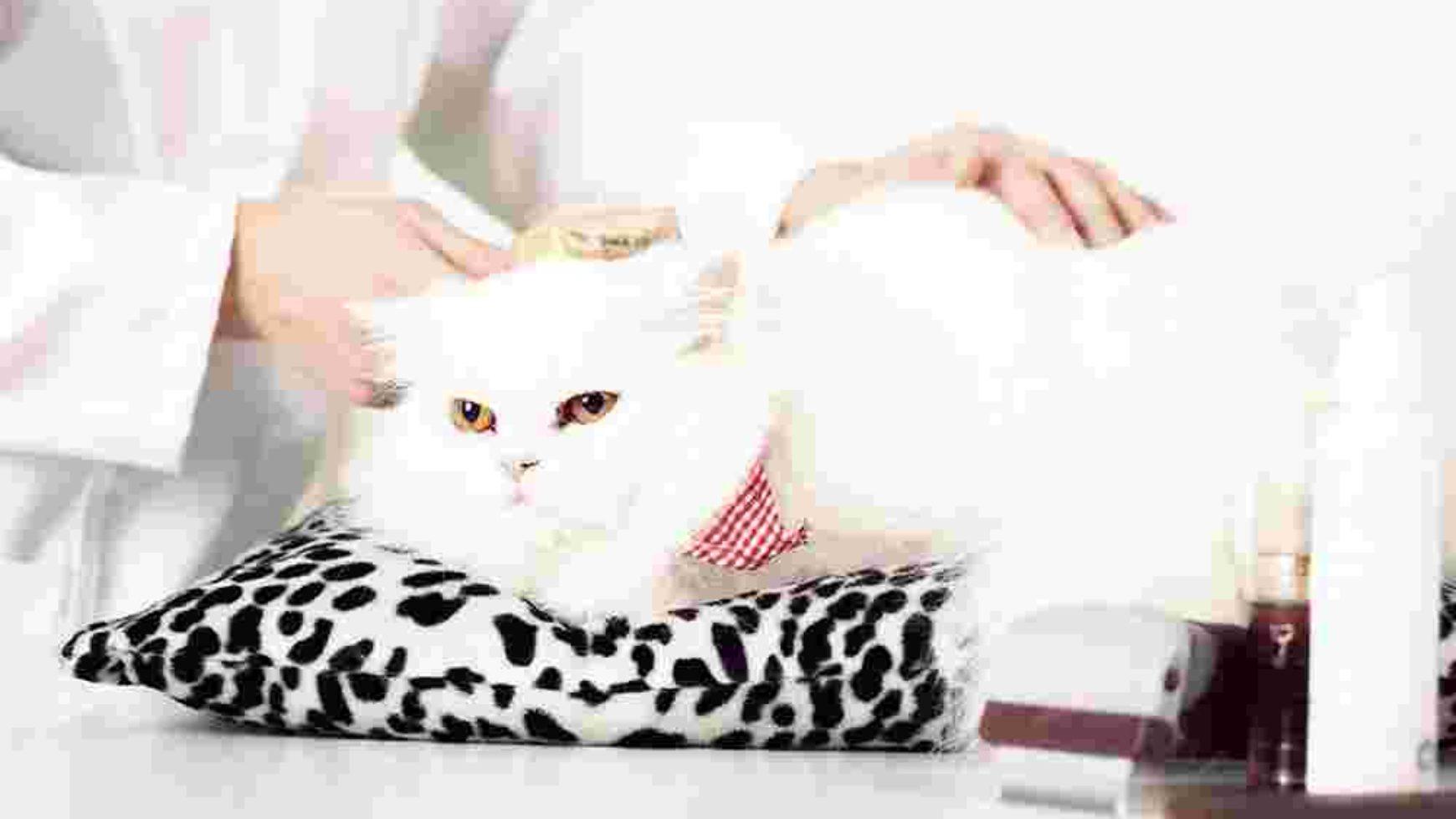 Top 10 Cat Problems
