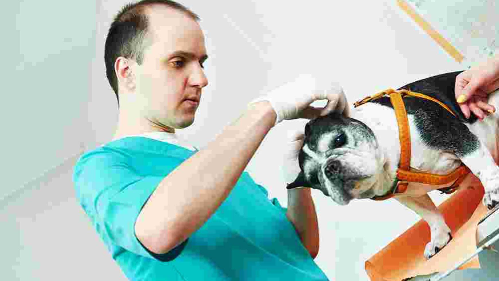 Animal Adoption News
